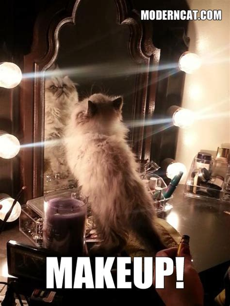 Funny cat memes: hilarious and sassy cats! Modern Cat Magazine