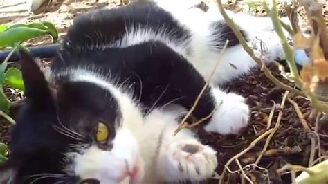 Grumpy Cat's Brother Pokey Plays Outside! - YouTube